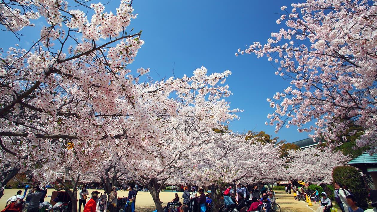 Dōgo-kōen Park (Yuzuki Castle Ruins)