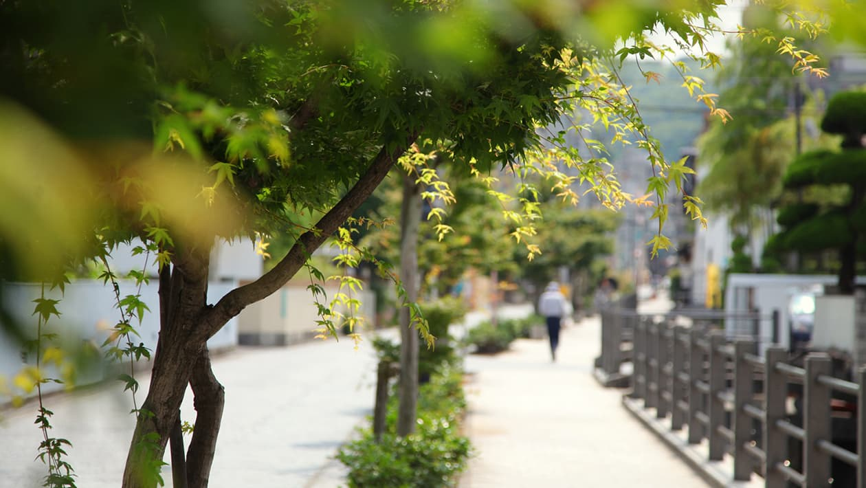 Promenade Nikitatsu-no-Michi